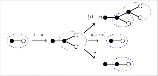 Illustration of the evolution of active links in a degree regular network with degree \(k = 3\). Agents are depicted as nodes which are open or solid depending on their opinion. Shown is the network in the neighborhood of an active link connecting nodes of different opinions. Arrows correspond to dynamical updates and are labeled with the corresponding transition rate. Depending on the parameters the updates lead to proliferation or decline of isolated active links (encircled dotted) and 2-fan motifs (encircled dashed).