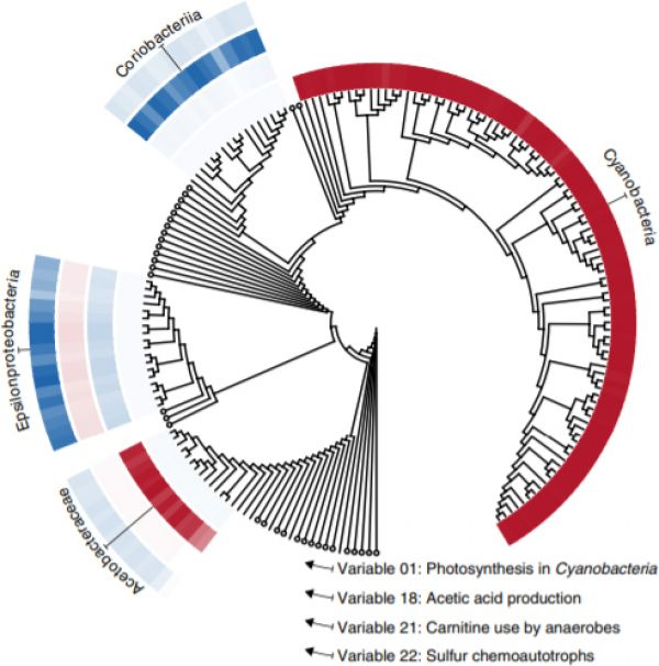 The diffusion map identifies effective bacterial trait variables based on genetic similarity. Variable entries for each genome are visualized as rings of colored tiles near the tips of a phylogenetic tree. Large negative or positive values (saturated reds and blues) indicate strong overlap with the focal strategy, whereas white indicates an absence of these capabilities. Circles are collapsed clades with near-zero entries in each of the four example variables. Clades receiving large negative or positive entries in any of the four example variables are expanded and annotated. The near-absence of semi-saturated tones indicates the strategies represented by these variables are approximately yes-or-no properties encoded by taxa.