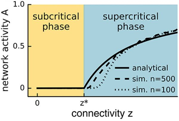 Network activity versus connectivity for the steady state solution of Equation (1) (straight line) and a simulated network with \(n = 500\) (dashed line) or \(n = 100\) (lower dashed line) neurons. A phase transition is observed at \(z^*\) (see main text) for the analytical solution with infinite n, whereas the transition appears in finite systems at slightly higher values of the control parameter and is smoothed out over a small interval. In the event-based simulation of Equation (1), the steady state network activity \(A\) was measured as \(A = s\tau /\eta T\), where s is the number of spikes recorded during the time period T following an initial relaxation period \(\eta\), and \(\tau\) is the period over which the neuron remains active.
