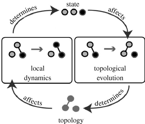 Diagrammatic illustration of the interplay of node-dynamics and structural evolution in adaptive networks.