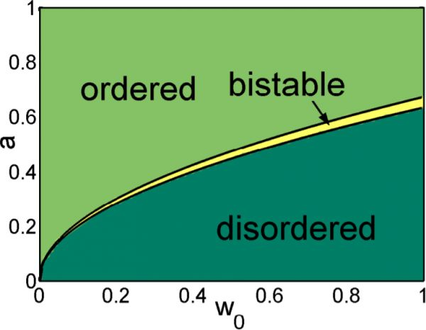 Phase diagrams of adaptive network systems with \(M = 3\) possible movement directions. The system transitions from unordered to ordered collective motion as the noise level \(w_0\) is decreased. At \(M\geq 3\) this  transition occurs in a discontinuously, creating a zone of bistability and hysteresis.