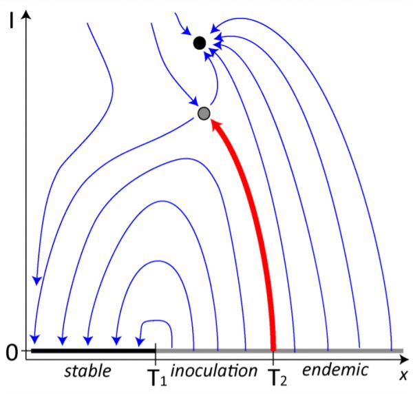 Simplified sketch of the phase portait in the epidemic model. Shown is a flow field (thin blue arrows) the attracting endemic state (black circle), a saddle point (grey circle) and a manifold of disease-free steady states (strong grey/black line), which can be stable (black) or unstable (grey). Depending on the initial value of the x-axis we can distinguish between stable disease-free, outbreak and collapse, and endemic behavior, indicated by labels on the axis. The behaviour changes at two threshold values (T1, T2) which are marked by a local change in the stability of the manifold and the heteroclinic connection. We note that this sketch has been simplified from the situation in the epidemic model. If the x-axis were the a–a link density [aa] the type II behavior would occur for intermidate values whereas the type III behavior would occur at high values, which is harder to visualize in a 2d-plot, but qualitatively similar.